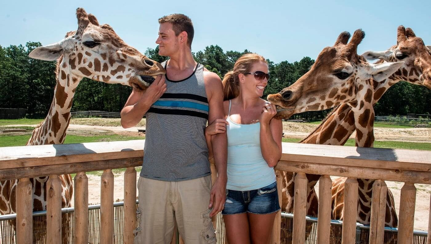Six Flags Giraffe Feeding