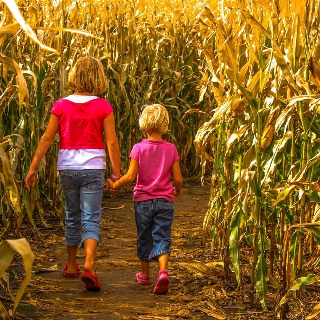 NJ Fall Halloween-Sisters Corn Maze