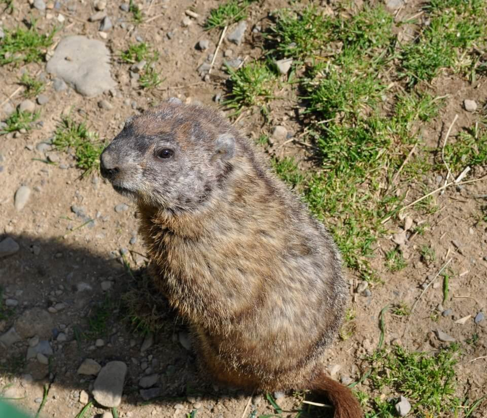 fun facts about new jersey groundhogs best of nj nj lifestyle