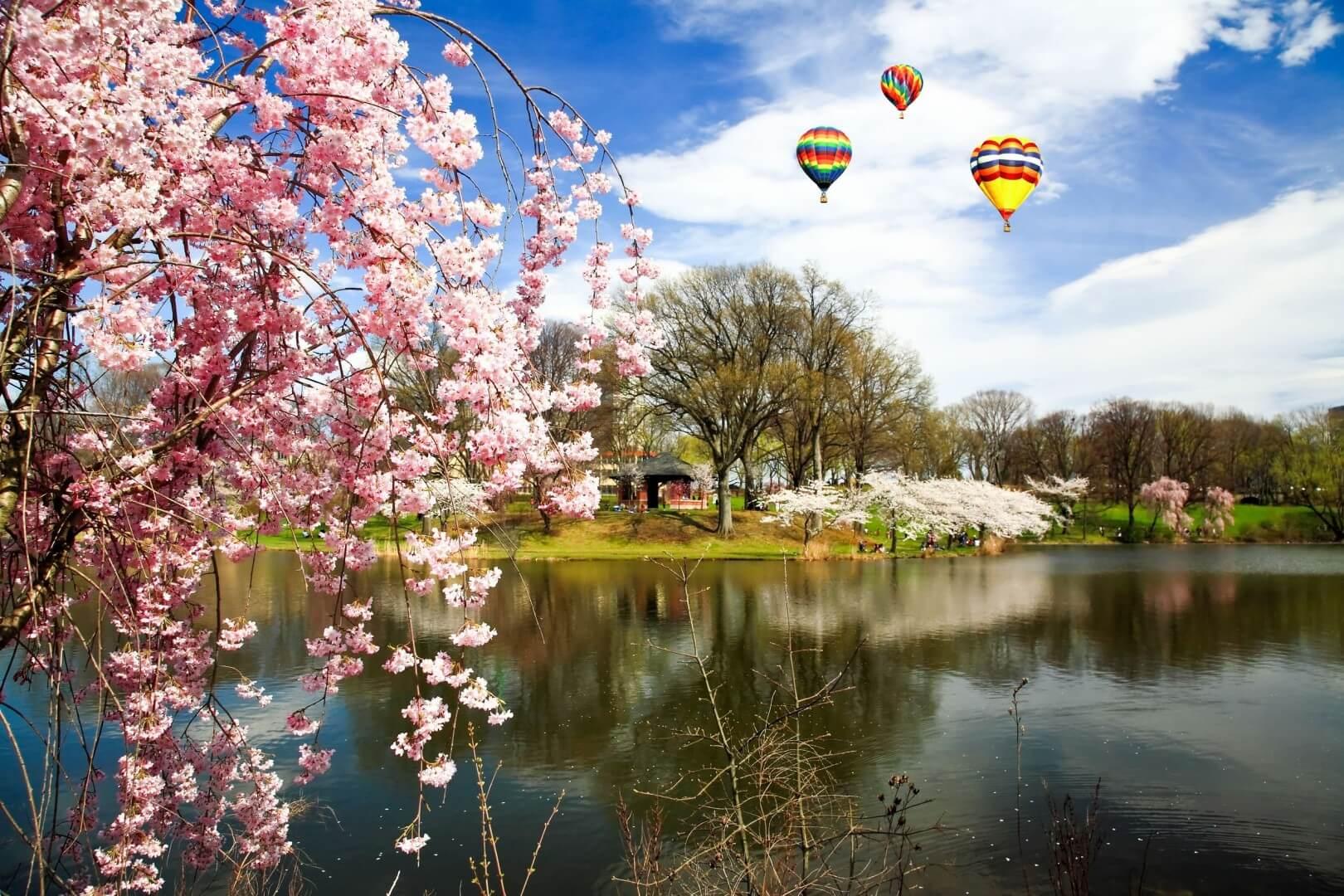 The Cherry Blossom Festival - Branch Brook Park