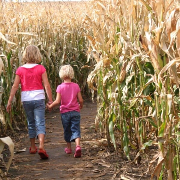 Sisters and a Corn Maze