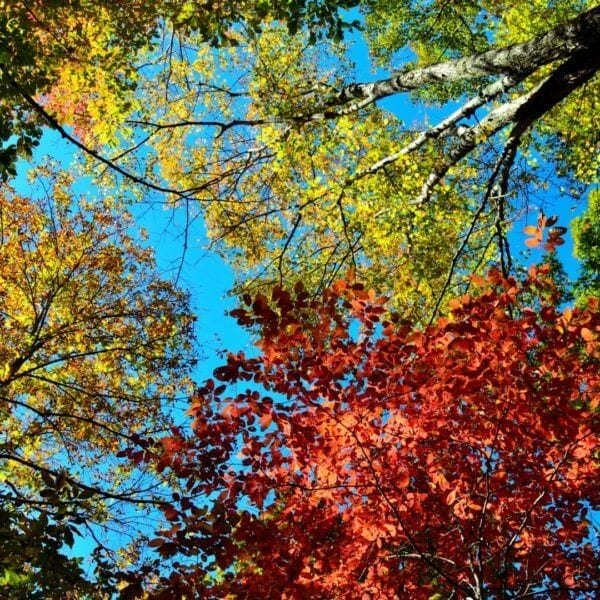 Colorful autumn leaves on trees