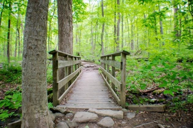 Sourland Mountain Preserve in Somerset County