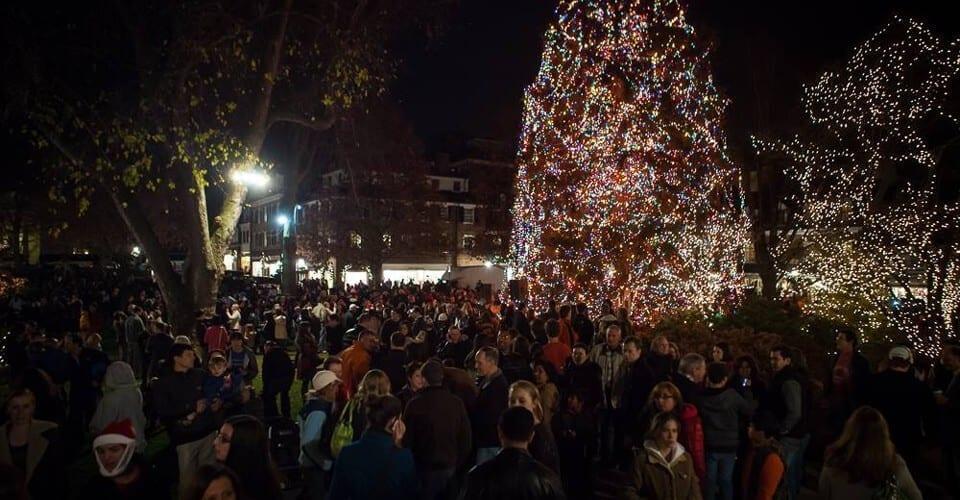 crowd surrounding lit trees