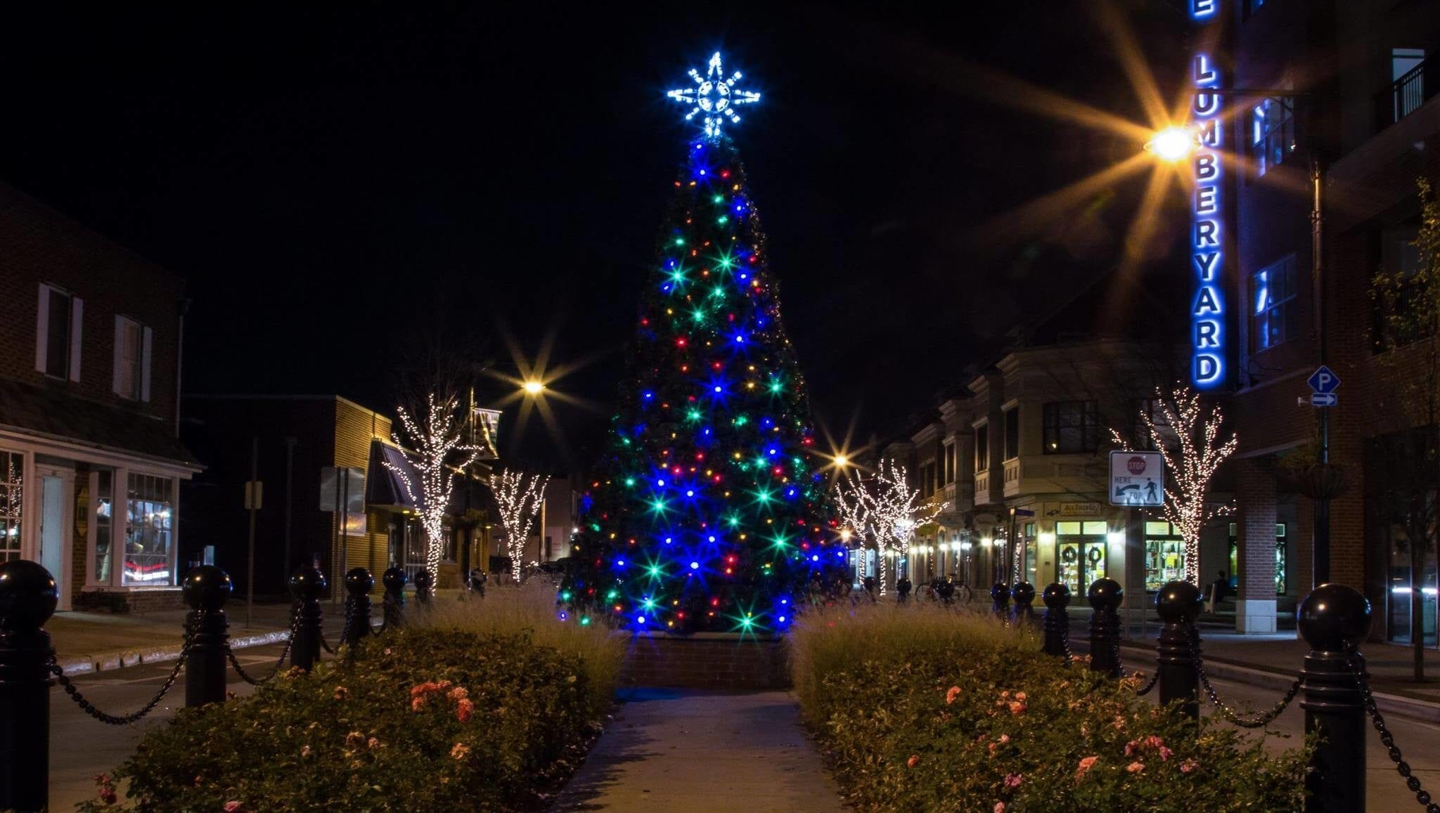 large lit tree in center of town square