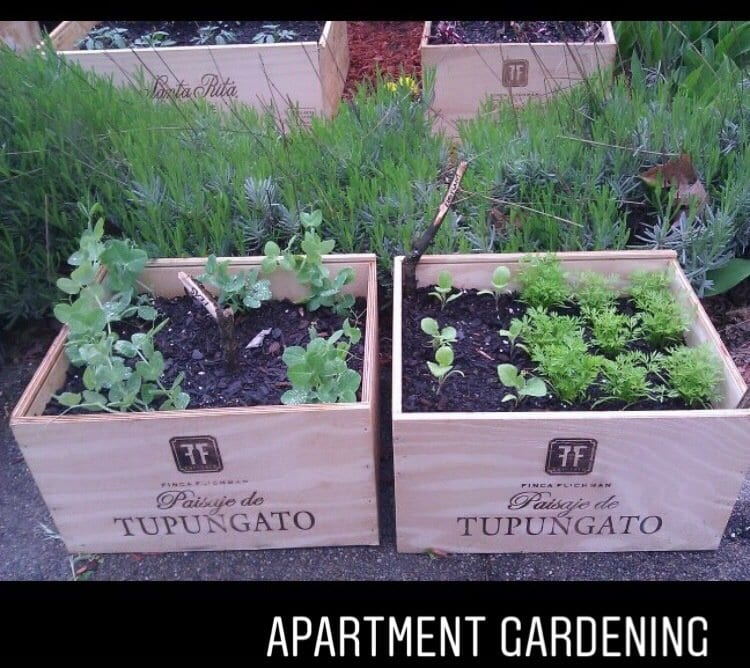 Apartment Gardening example